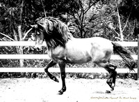 """Struttin' Stallion""~7399"
